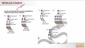 2015 LYS Biyoloji Gamet Oluşumu izle