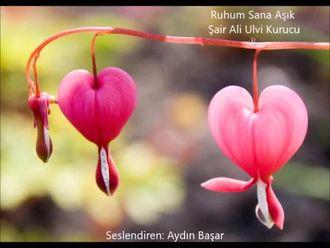 Ali Ulvi Kurucu- Ruhum Sana Aşık (Kutlu Doğum Şiir) izle