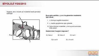 2013 YGS Biyoloji Hücre Zarı izle