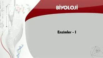 Enzimler - 1 izle