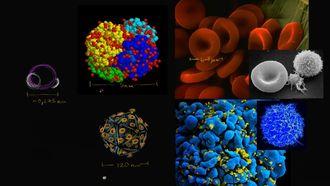 Hücrelerin Ölçüleri izle