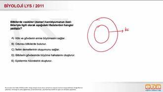 2011 LYS Biyoloji Vasküler Kambiyum izle