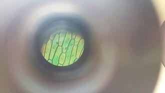 Mikroskopta Bitki Hücresinin Görünümü izle